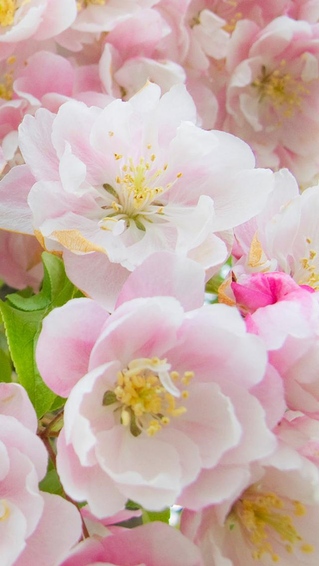 無料ダウンロード ピンク 花 壁紙 トップの壁紙はこちら トップ
