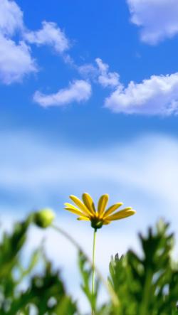 かっこいいグラフィックや綺麗な風景と花写真イラスト